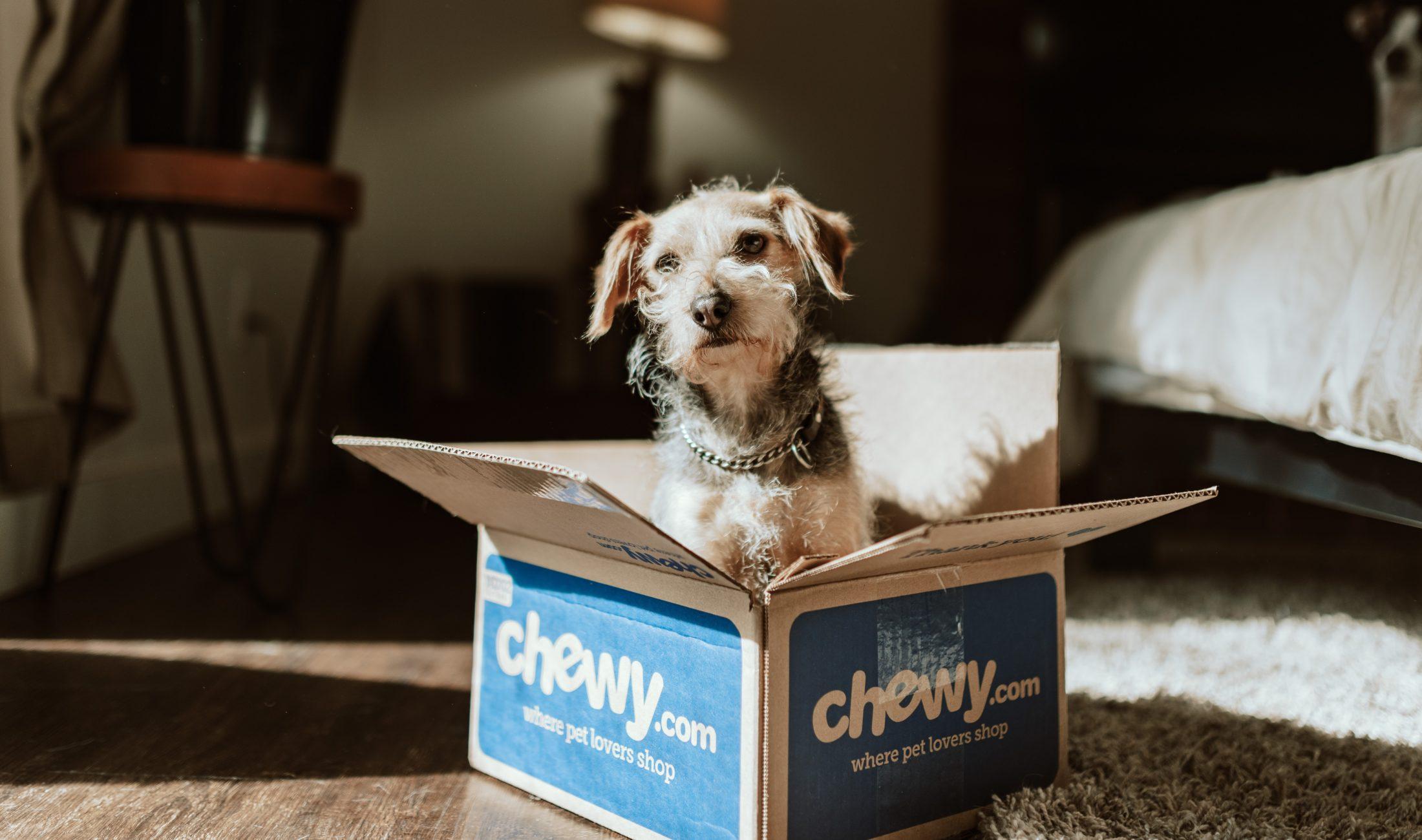 cachorro de presente dentro da caixa de papelão