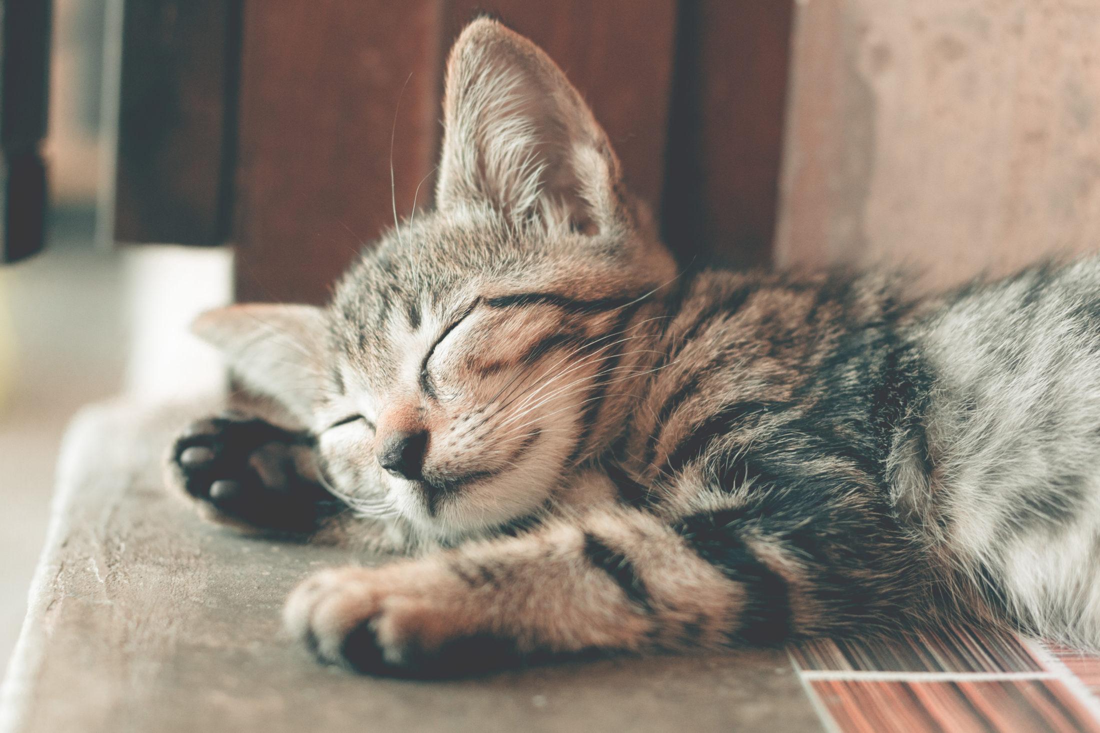 gato tigrado deitado no chão de olhso fechados