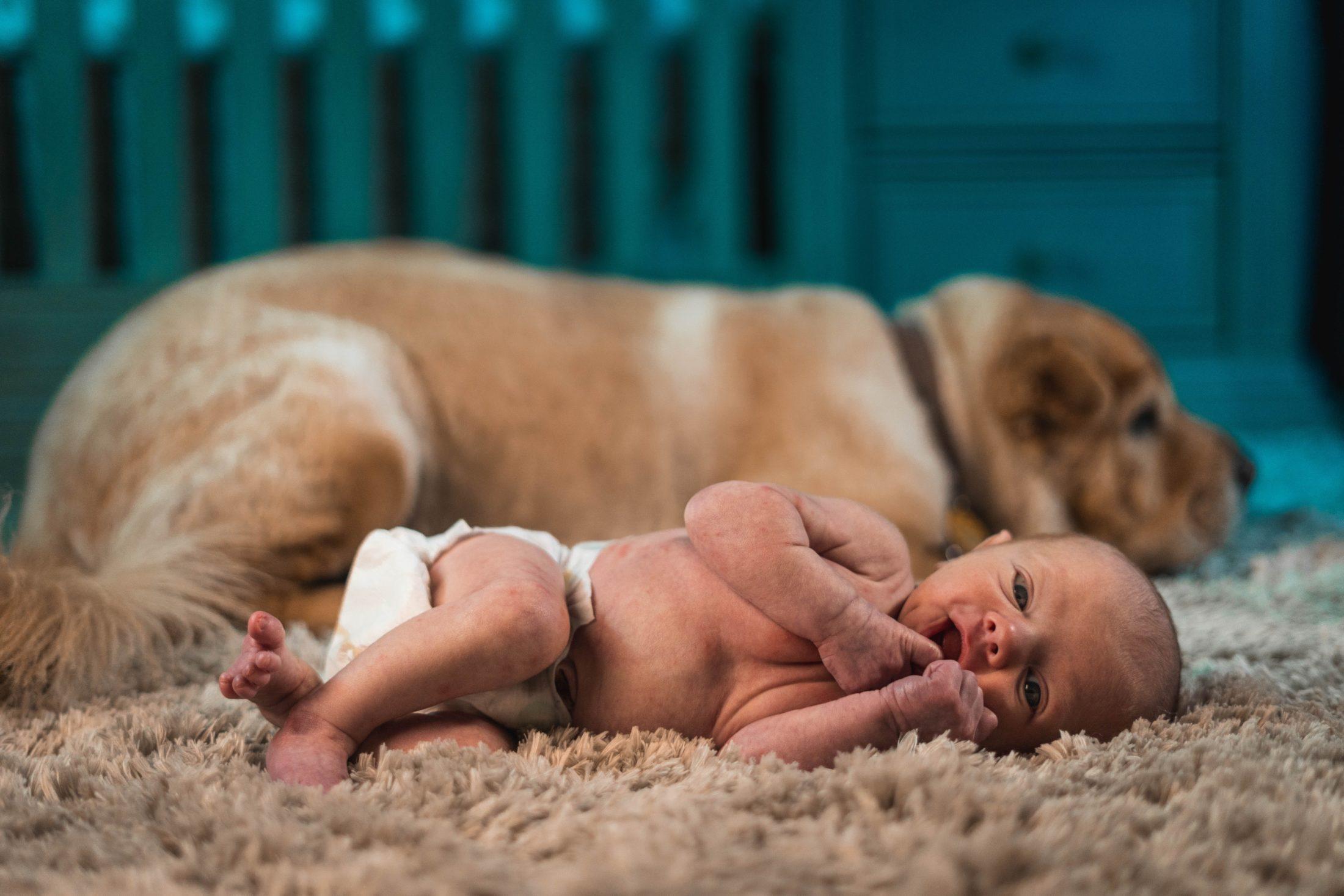 cachorro e eb6e deitados juntos no tapete