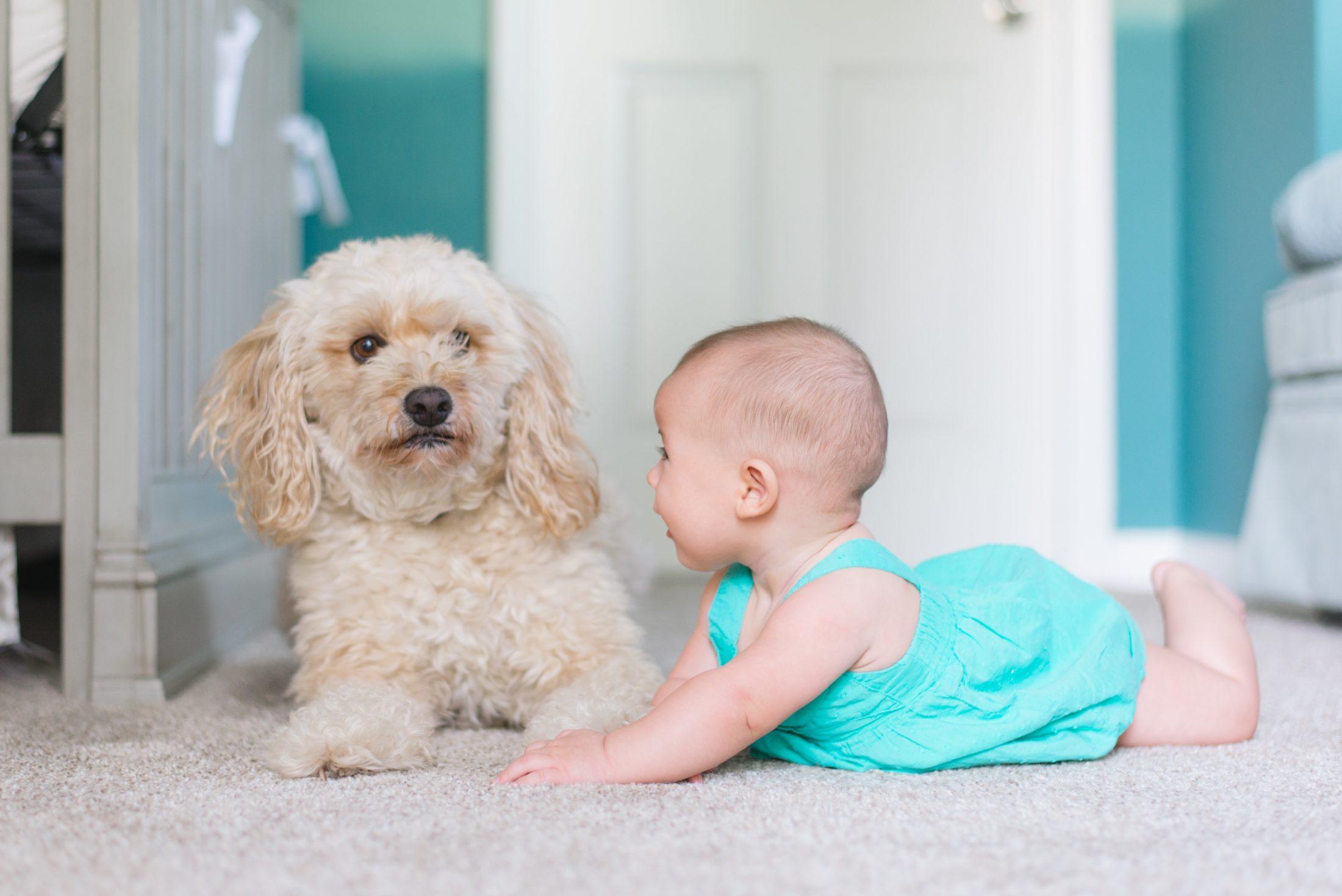 cachorro e beb6e juntos no chão