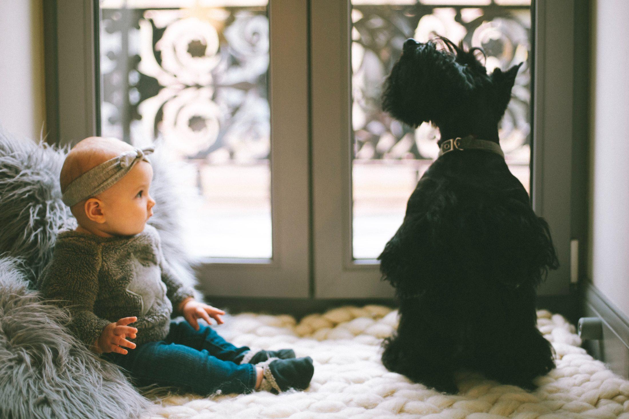 cachorro e bebê em frente a janela