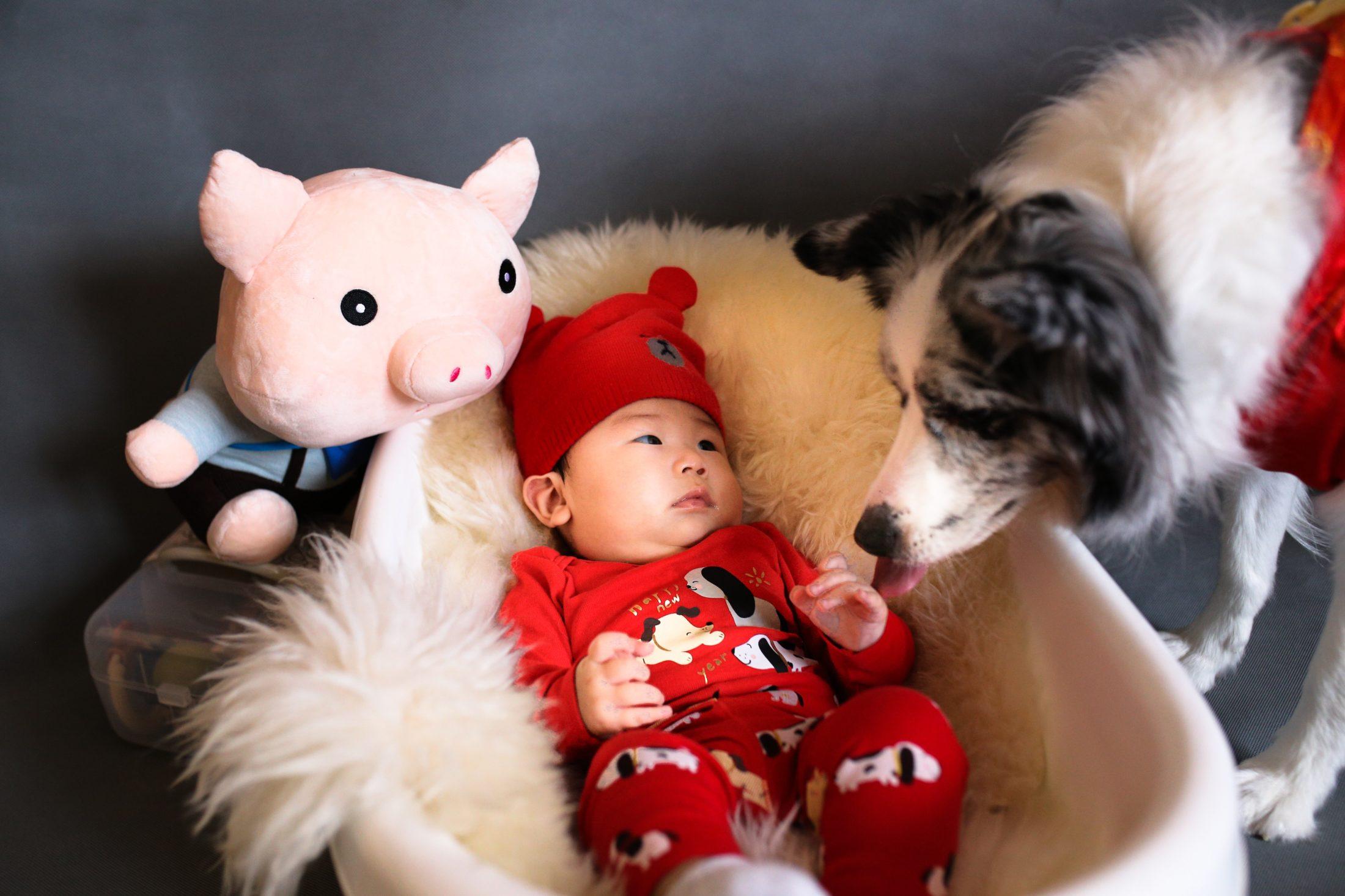 cachorro e bebê no berço