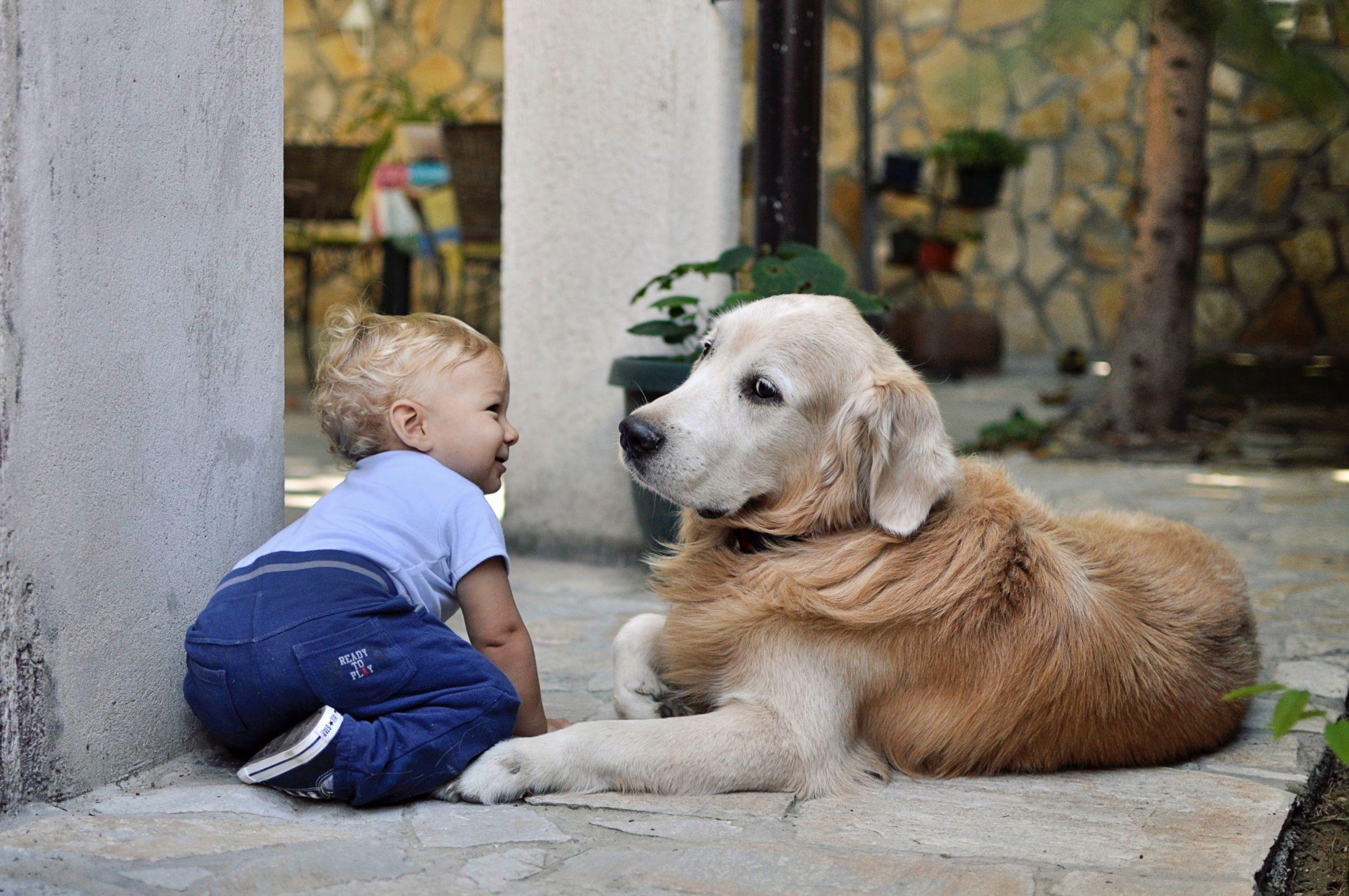 cachorro e bebê juntos em casa
