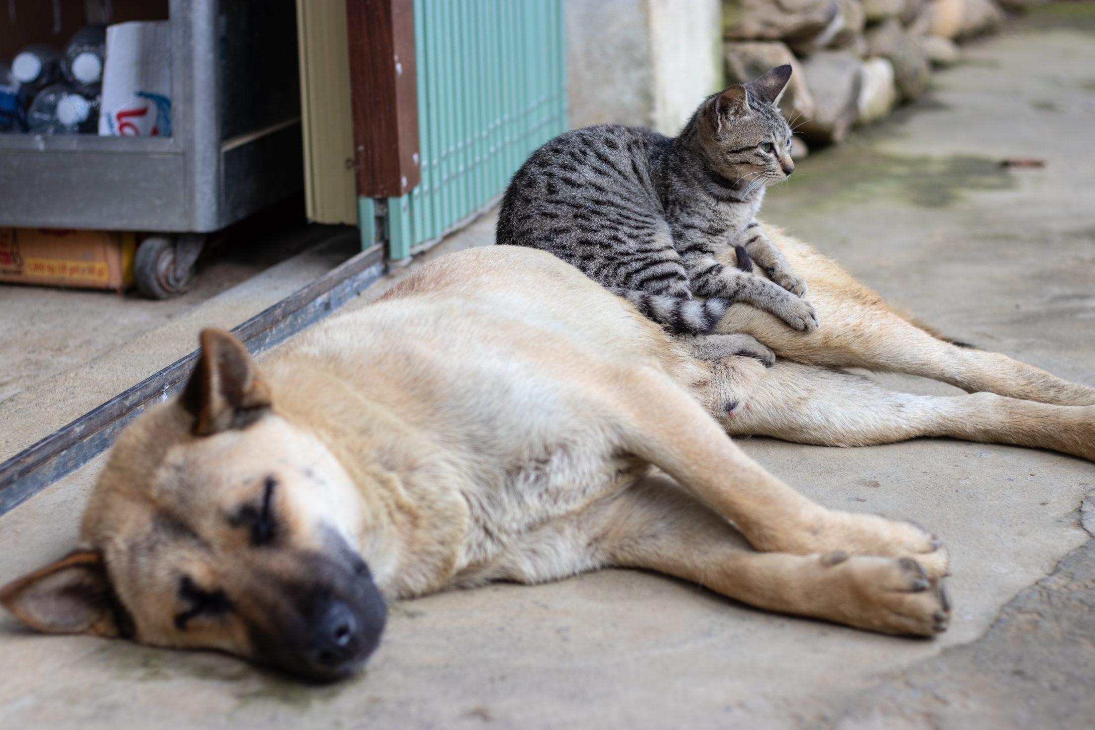 cachorro e gato juntos deitados no chão no quintal