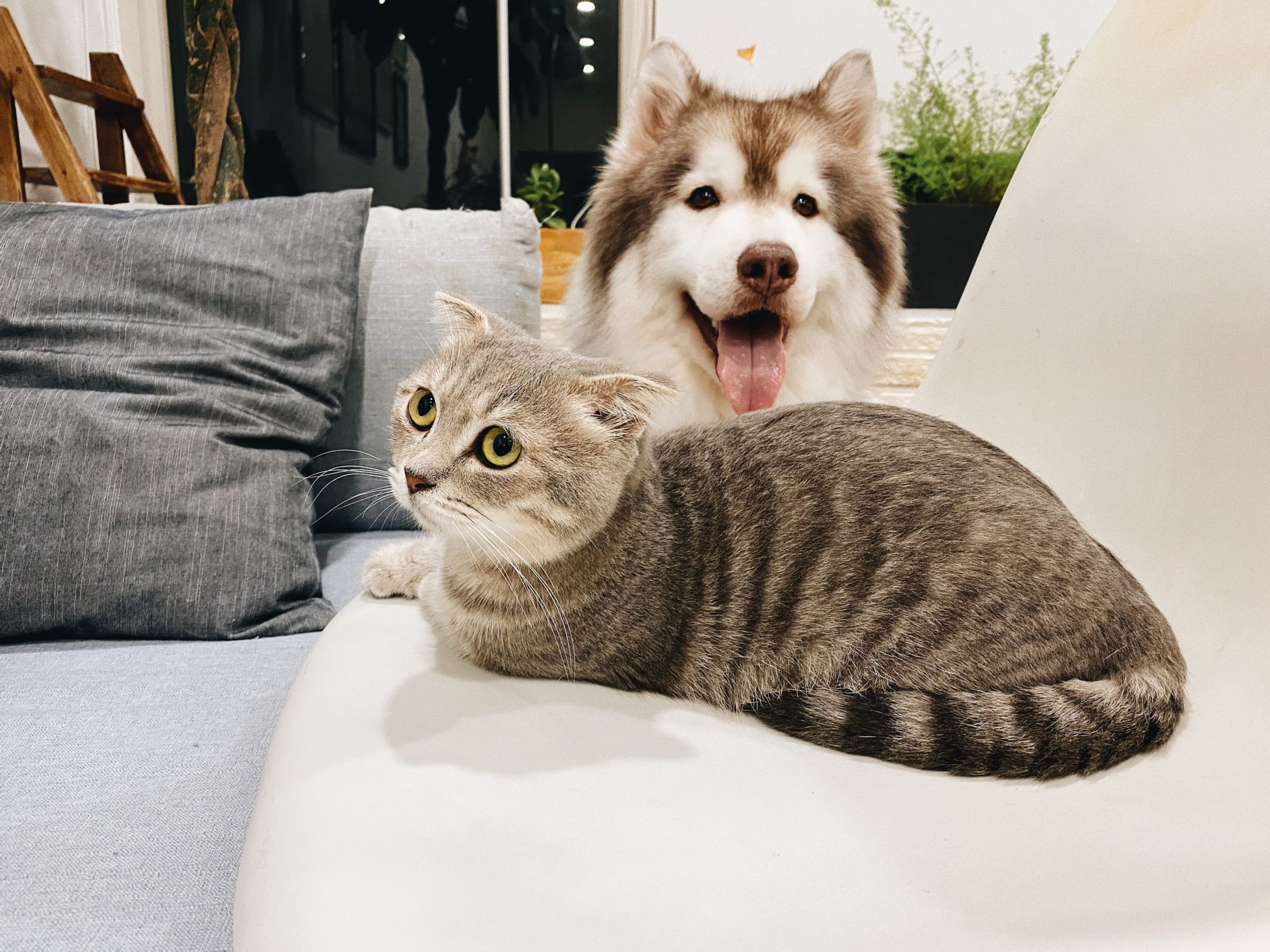 cachorro e gato juntos no sofá da sala