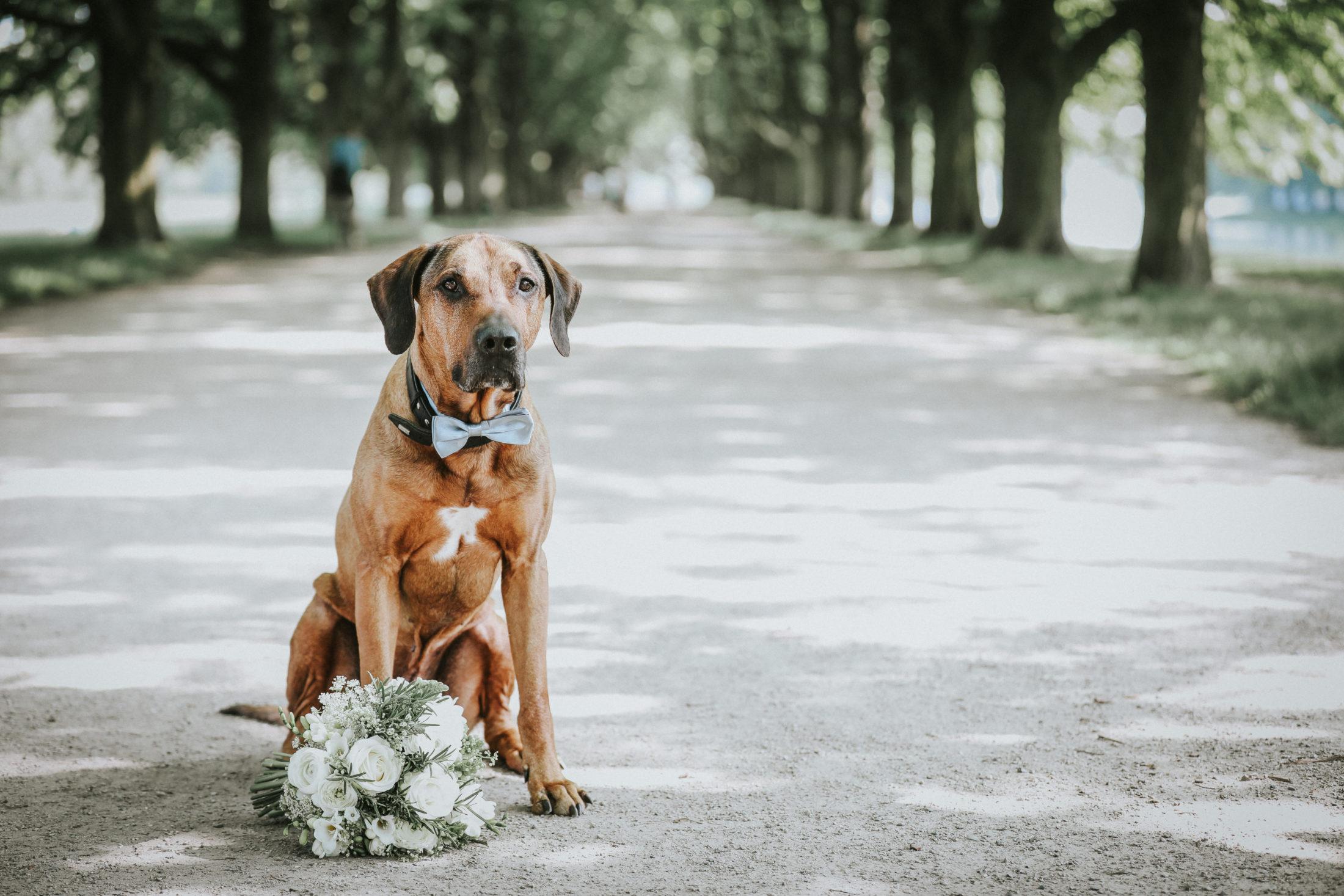 cachorro em casamentos com buque de flores