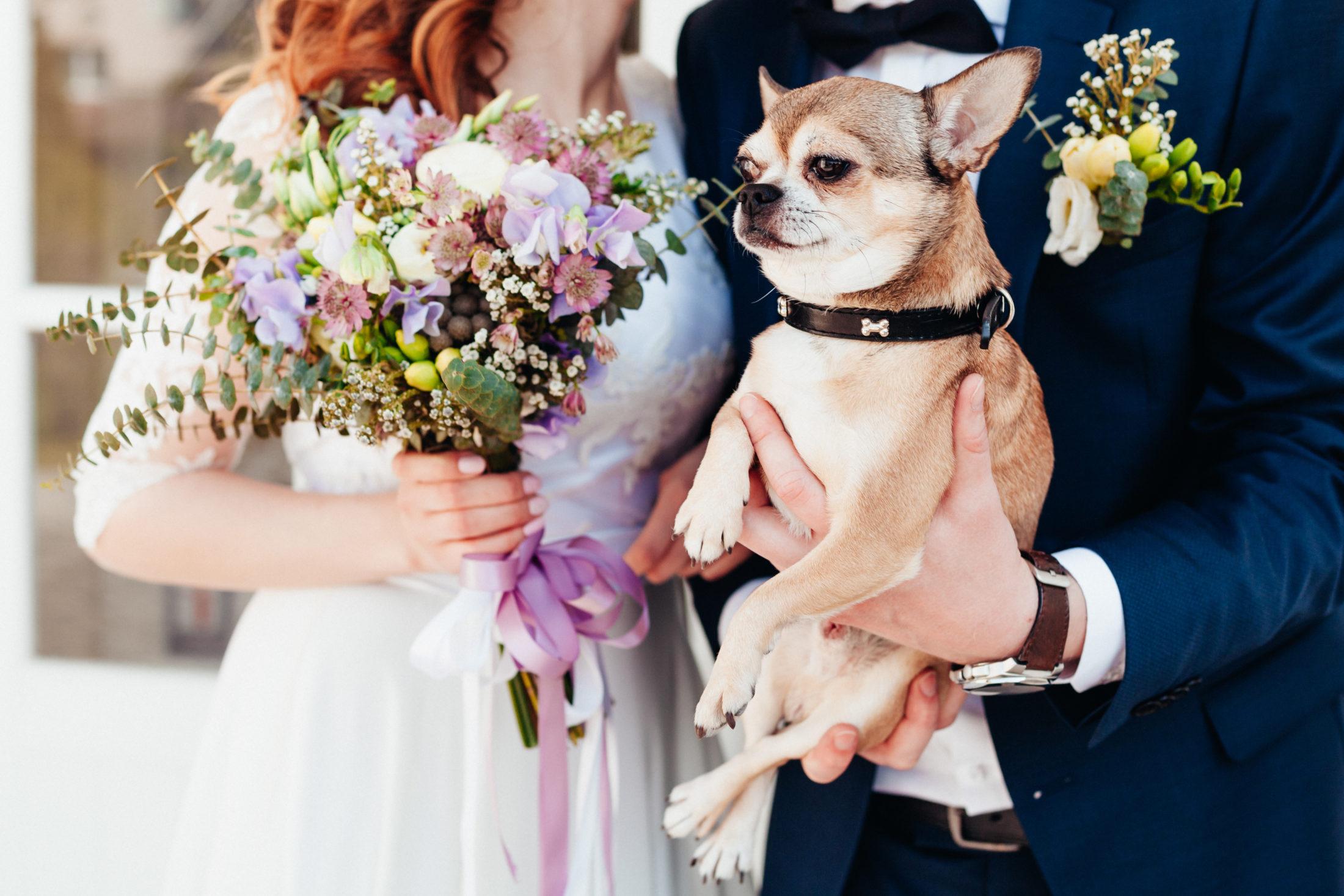 casal de noivos segurando cachorro em casamentos