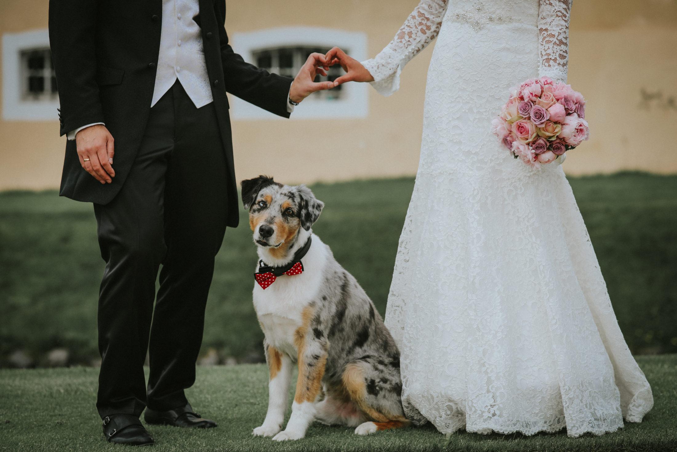 casal de noivos e cachorro em casamentos