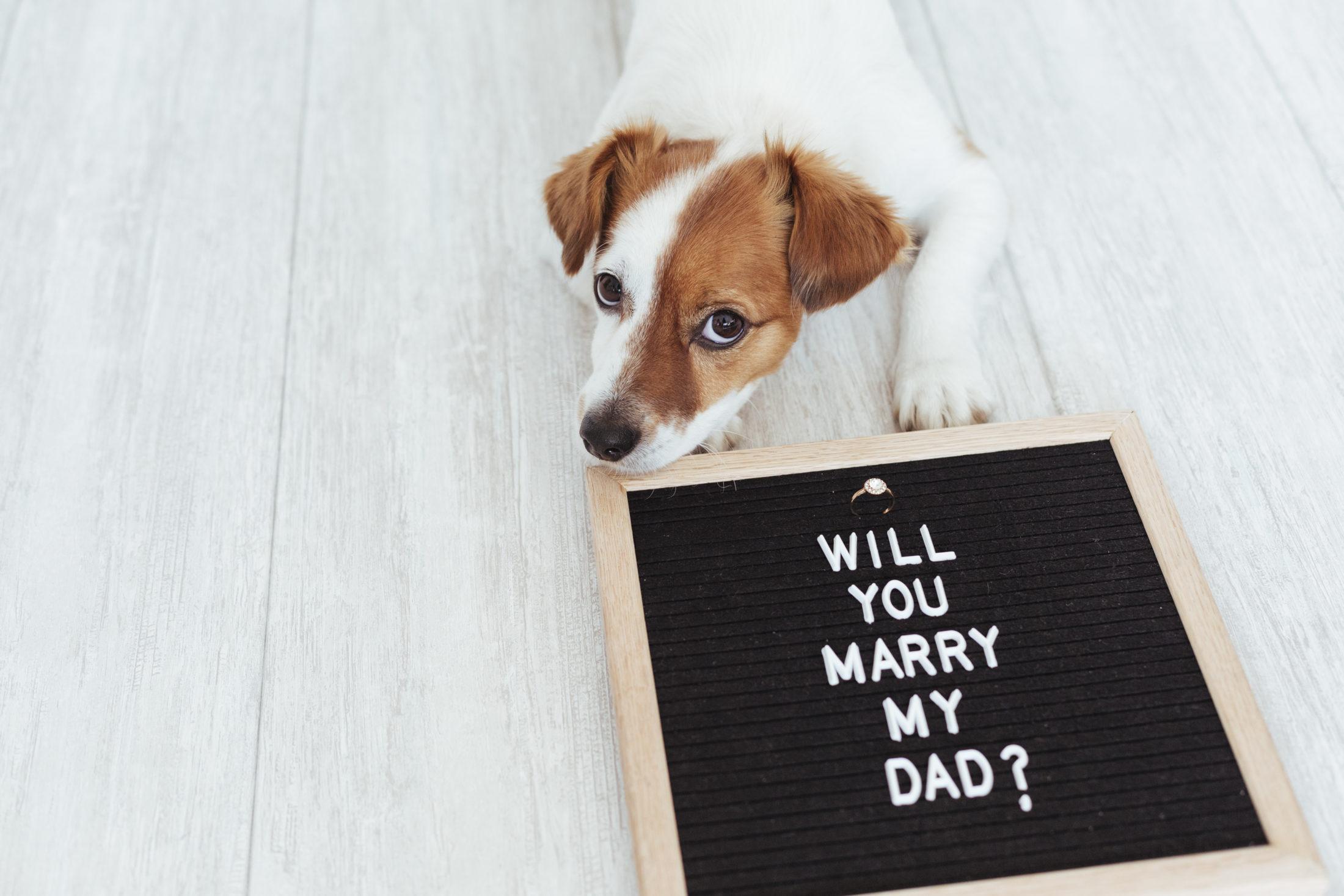 cachorro em casamentos fazendo o pedido