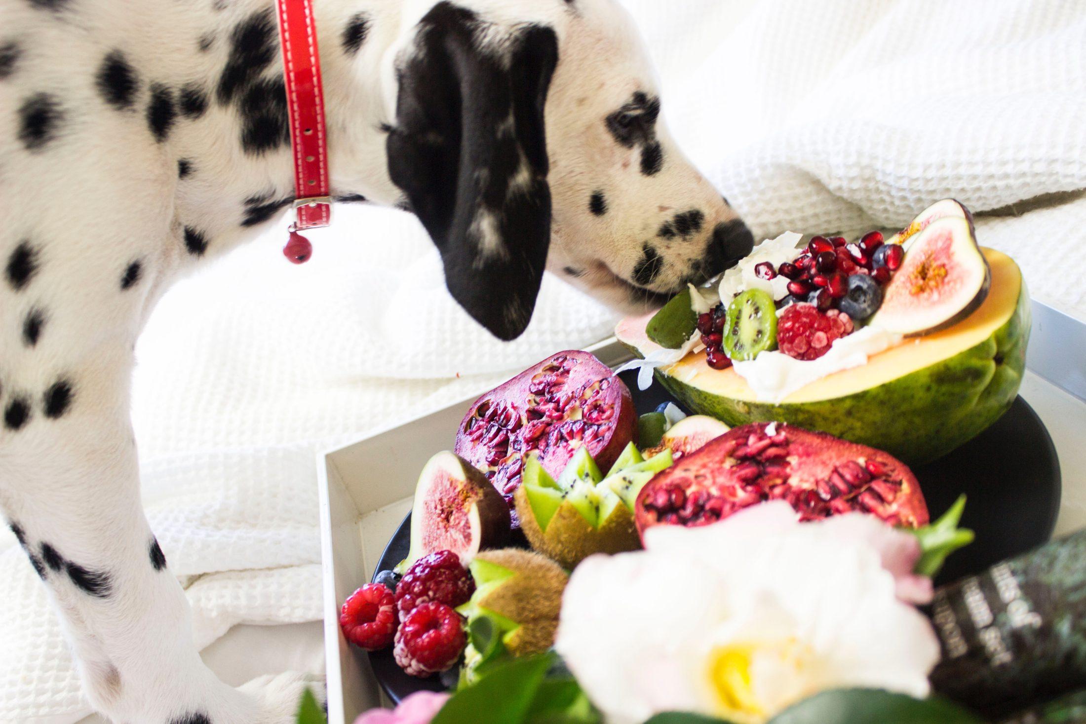 cachorro faminto comendo vegetais