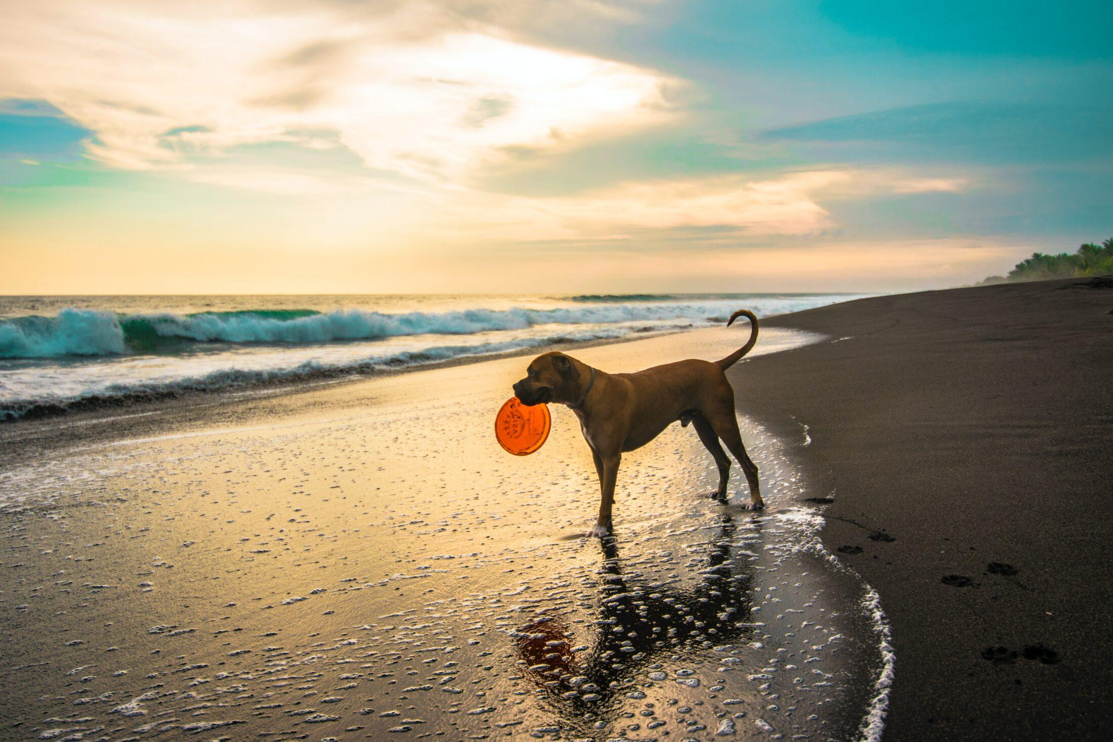cachorro feliz na praia