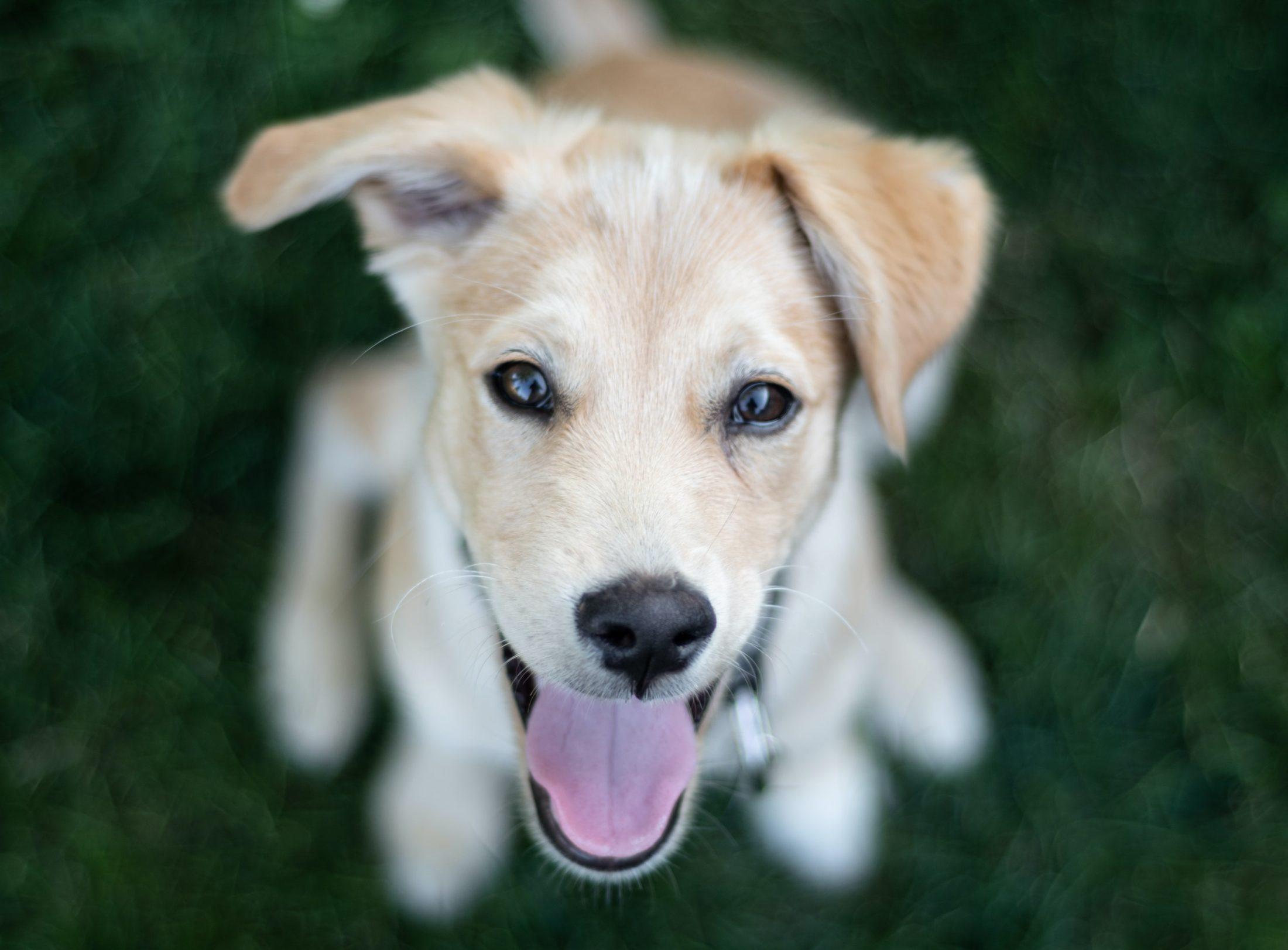 cachorro fêmea de raça desconhecida