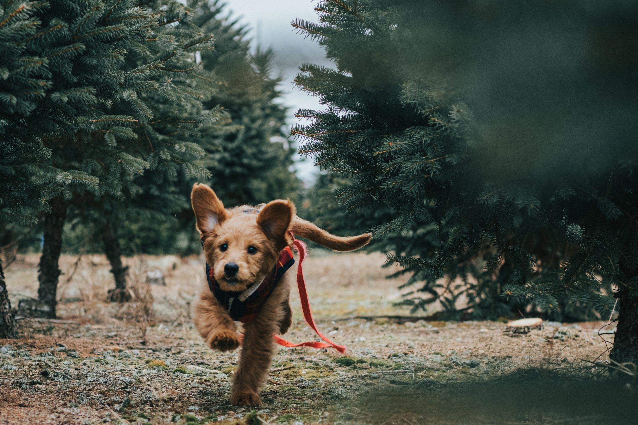 cachorro fujão correndo no parque