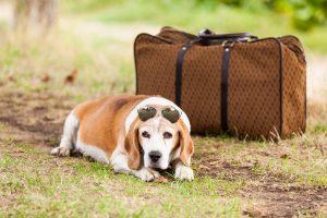 Cachorro de malas prontas para passar sua estadia em hotel para cachorro.