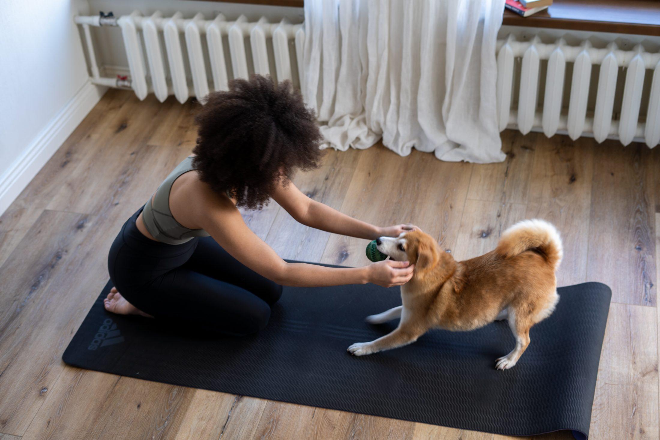 cachorro na ginástica yoga com sua dona