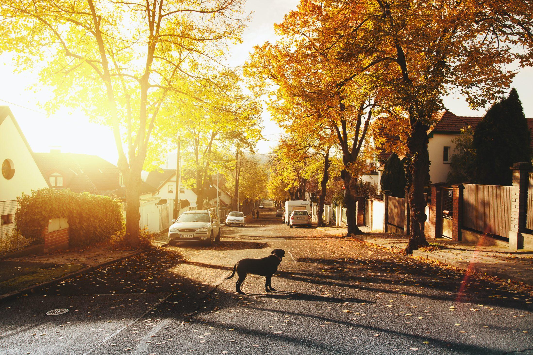 cachorro que foge para marcar território na rua