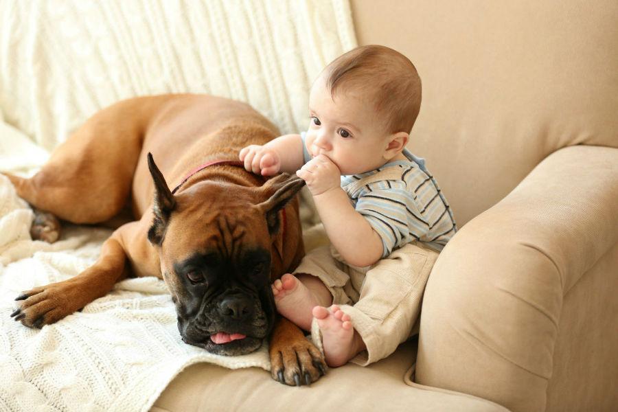 cachorro-raca-bully-crianca