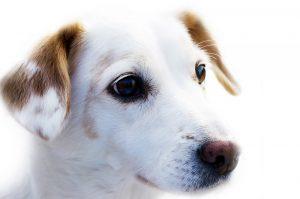 Fotos de cachorro vira lata: os cachorros vira lata ou SRD são as melhores companhias que se pode ter na vida.