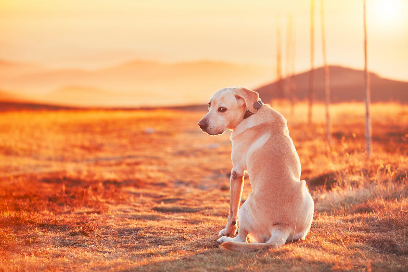 Fotos de cachorro vira lata: Cachorro abandonado na rua assistindo ao espetáculo do pôr do sol.