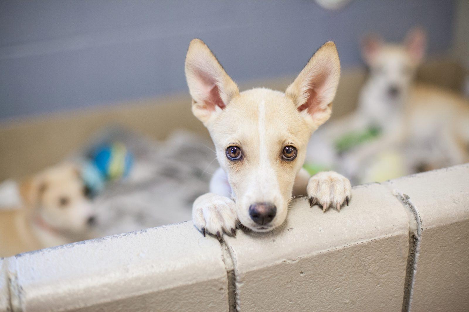Fotos de cachorro vira lata: cãzinho esperando para ser adotado no abrigo junto a outros cachorros.