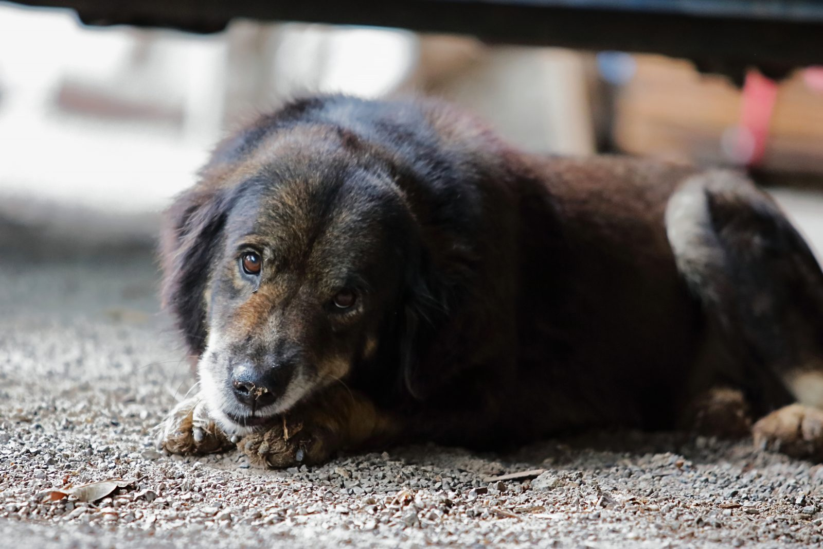 Fotos de cachorro vira lata: cachorro abandonado na rua.