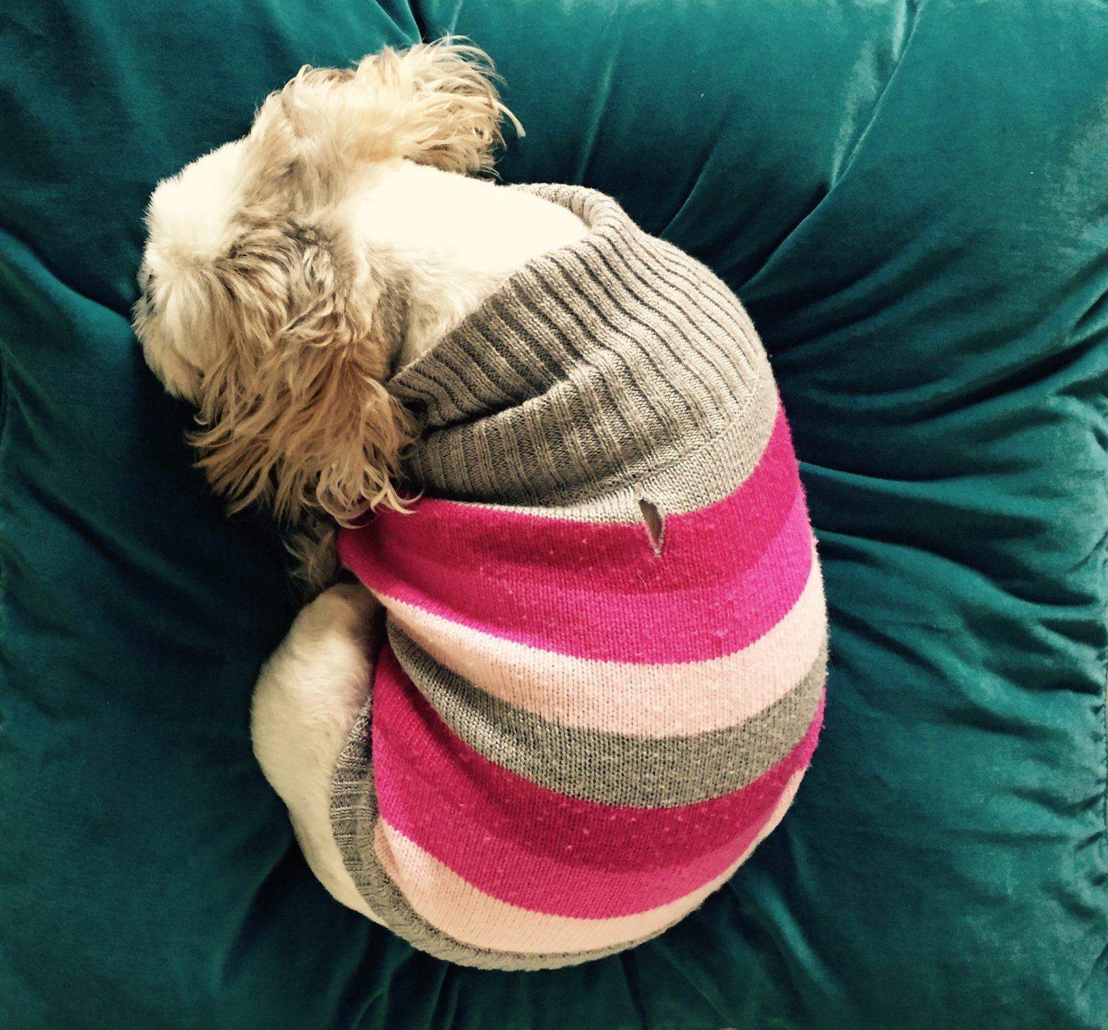 fatos-hilarios-cachorros-andam-circulos-dormir
