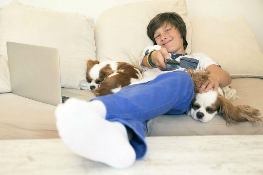 cachorros assistem tv