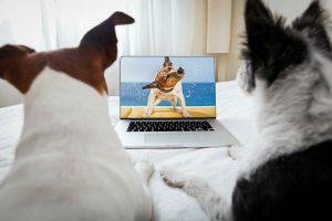 cachorros-assistem-tv2