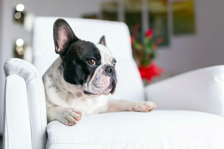 cachorros-assistem-tv3