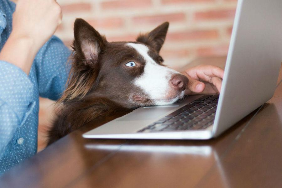 cachorros-assistem-tv5