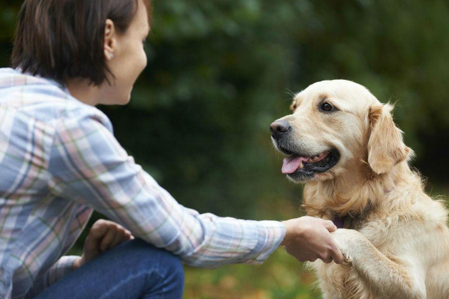 cachorros-entendem-humanos
