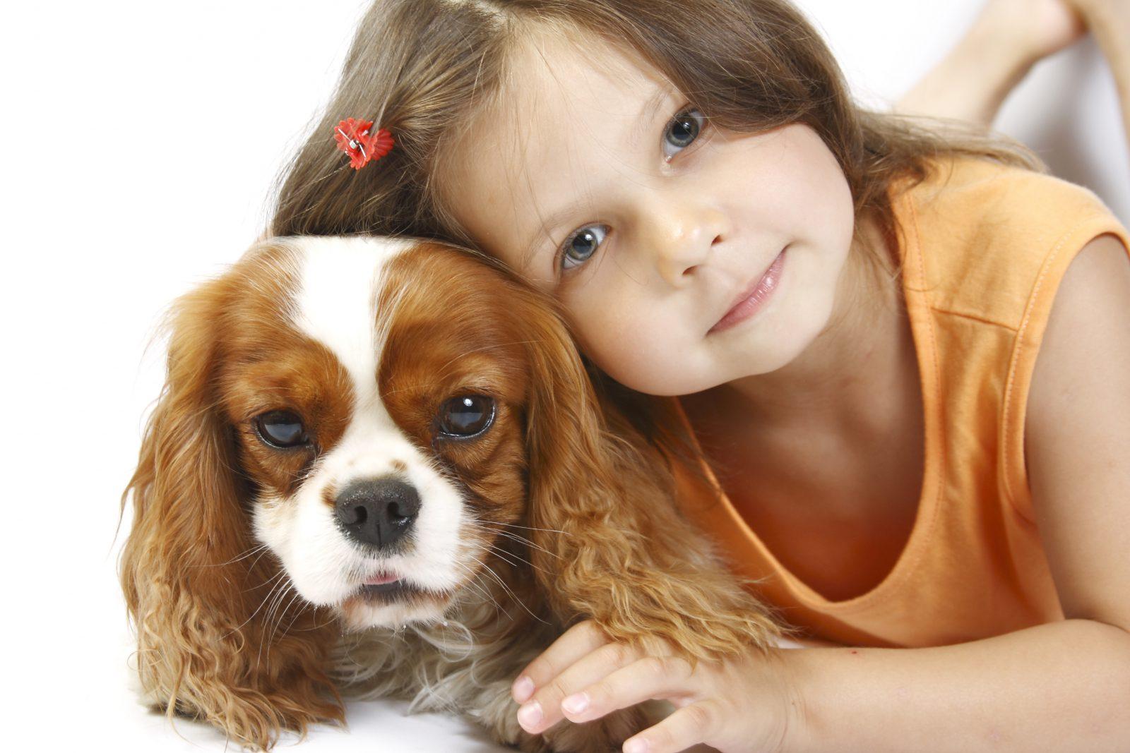 Cachorro pequeno: avalier King Charles Spaniel e sua jovem dona posando para uma foto.