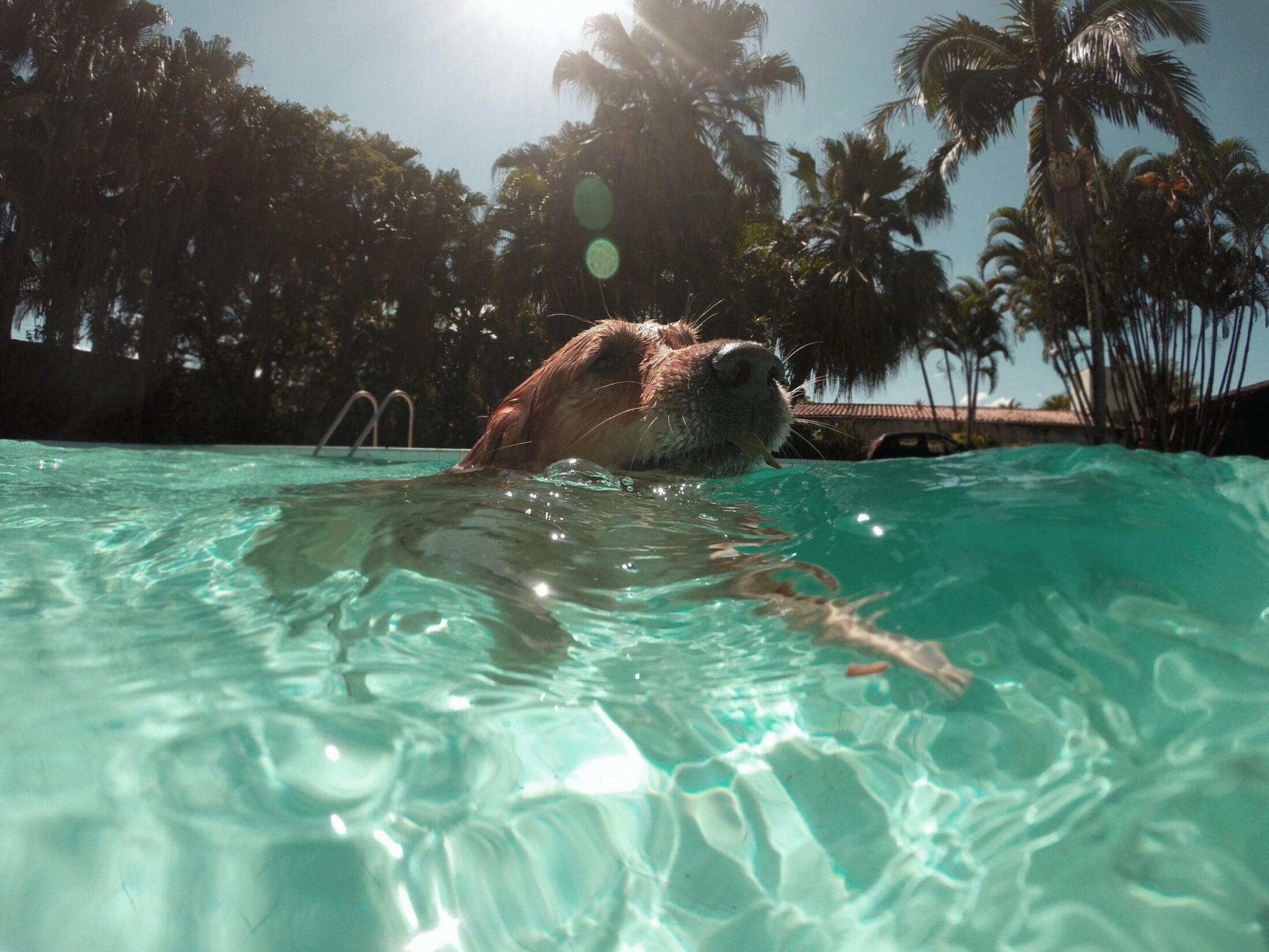 Cachorros podem nadar desde que estejam aptos para isso.