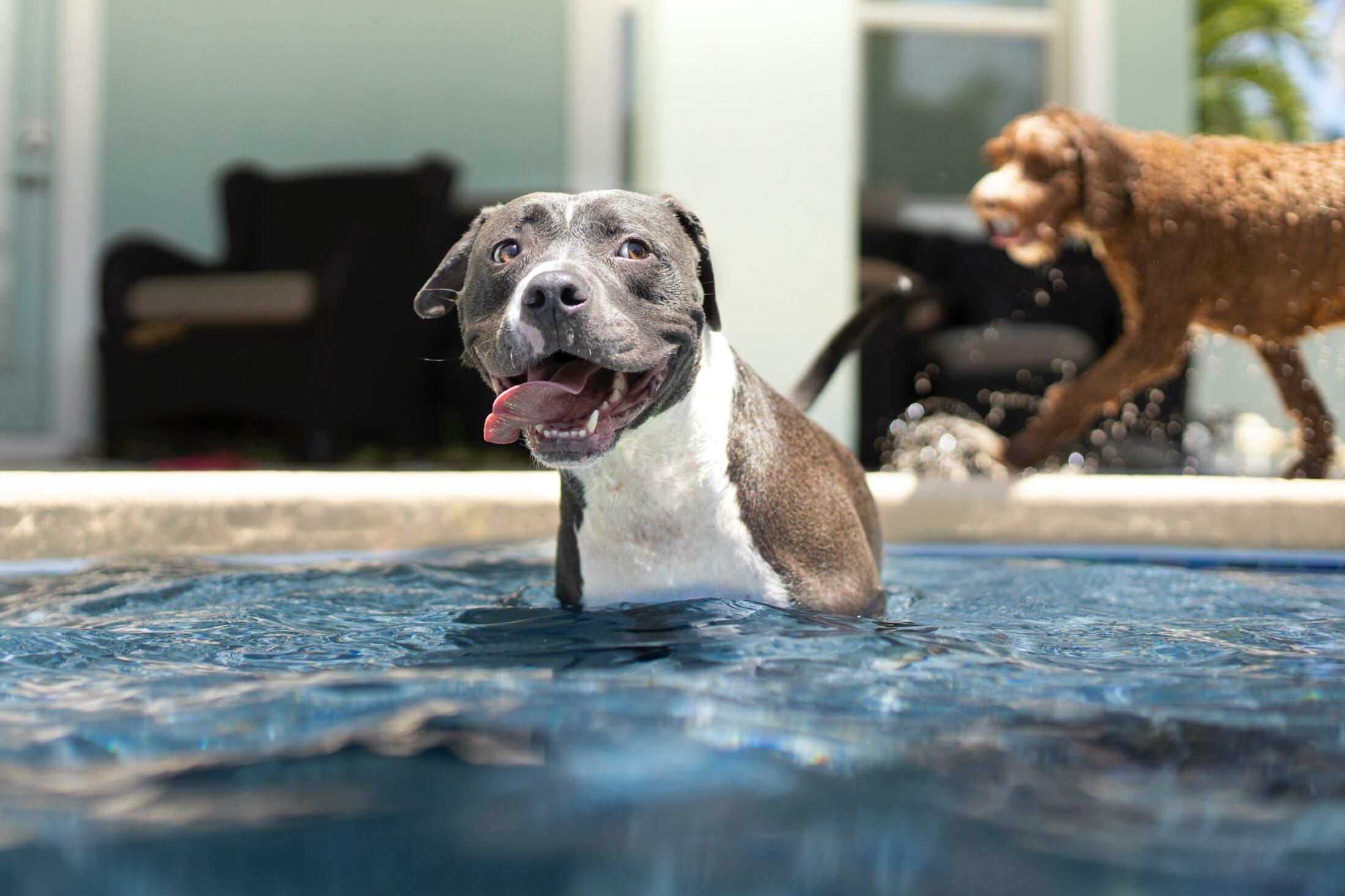 Nem todas as raças de cachorros podem nadar.