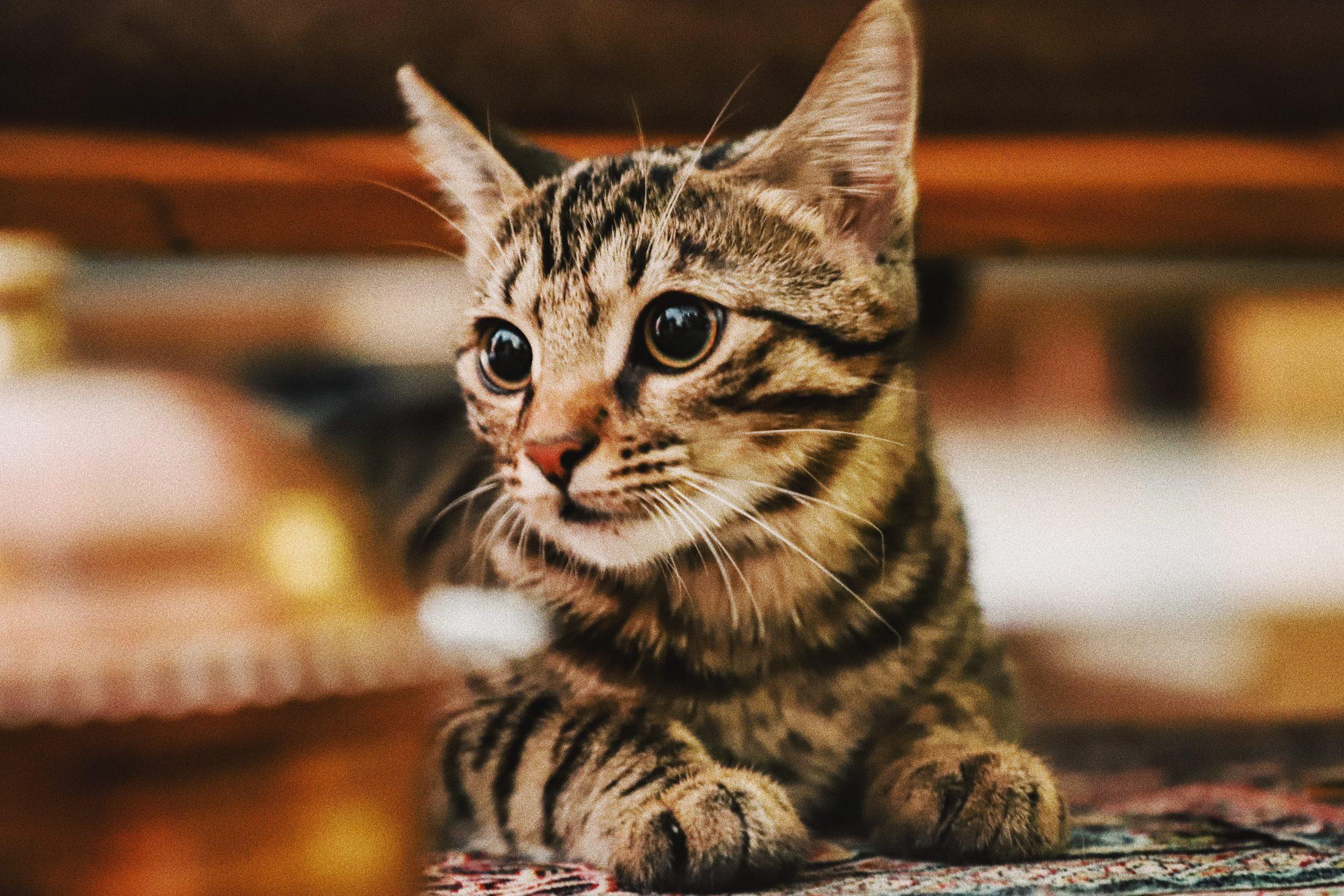 Cães e gatos devem ter seus locais próprios de higiene e alimentação.