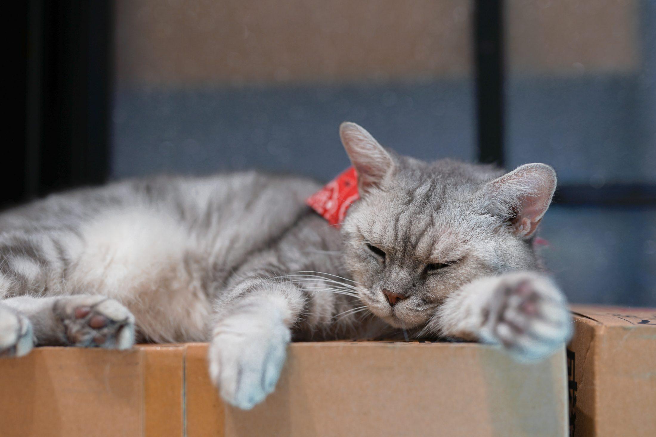 A caixa para gatos é como uma cama confortável.