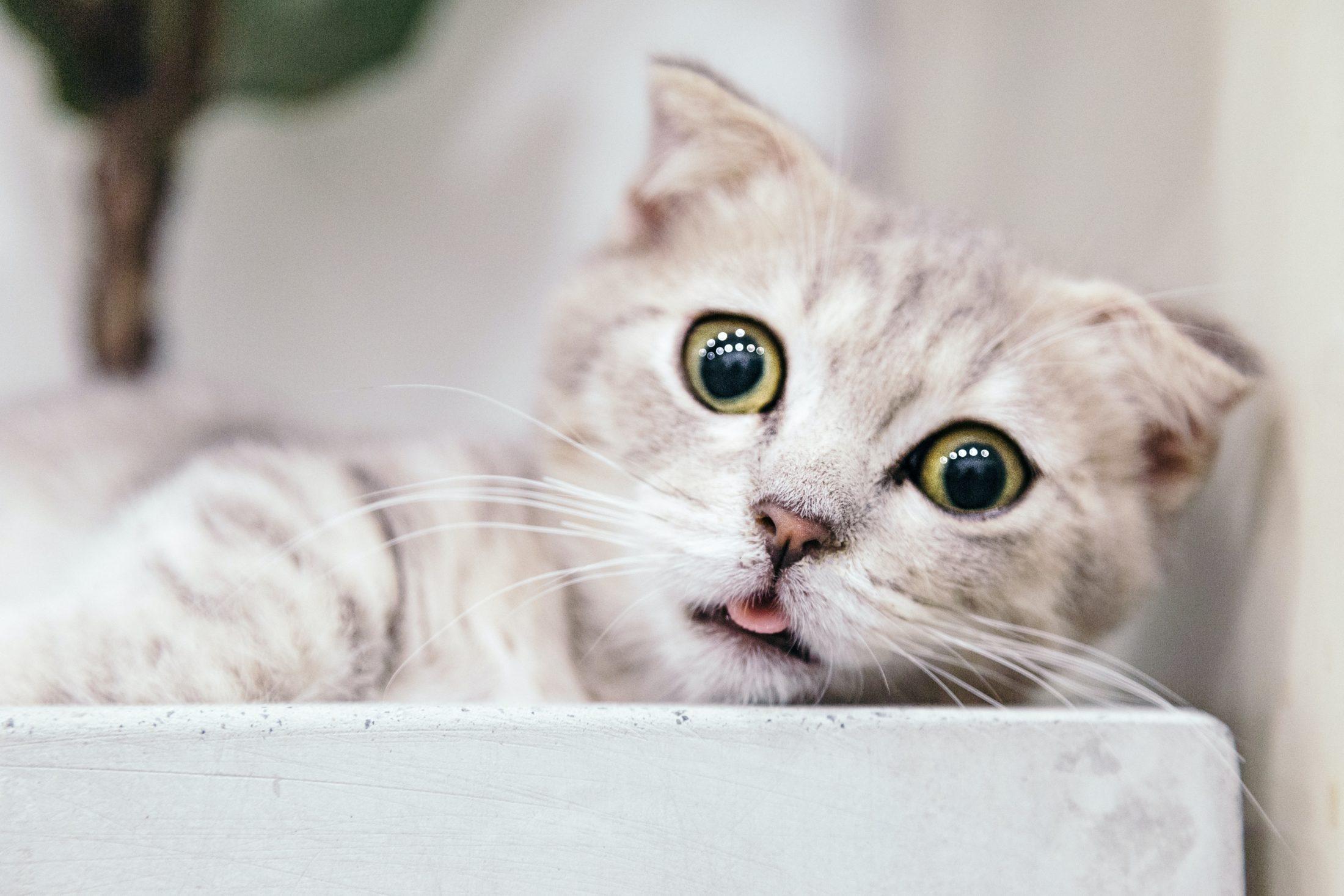 a caixa de areia para gato ideal deve ser rasa