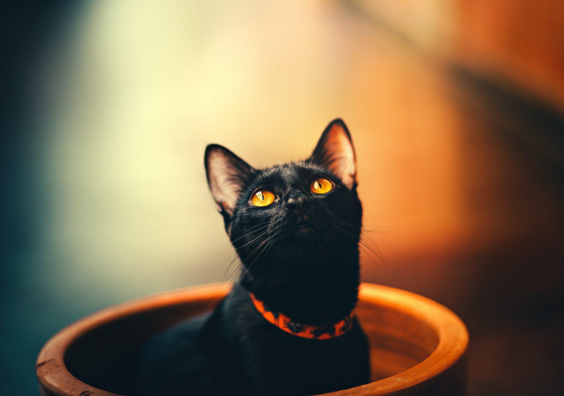 Você deve ter paciência para ensinar o bichano a usar a caixa de areia para gato.