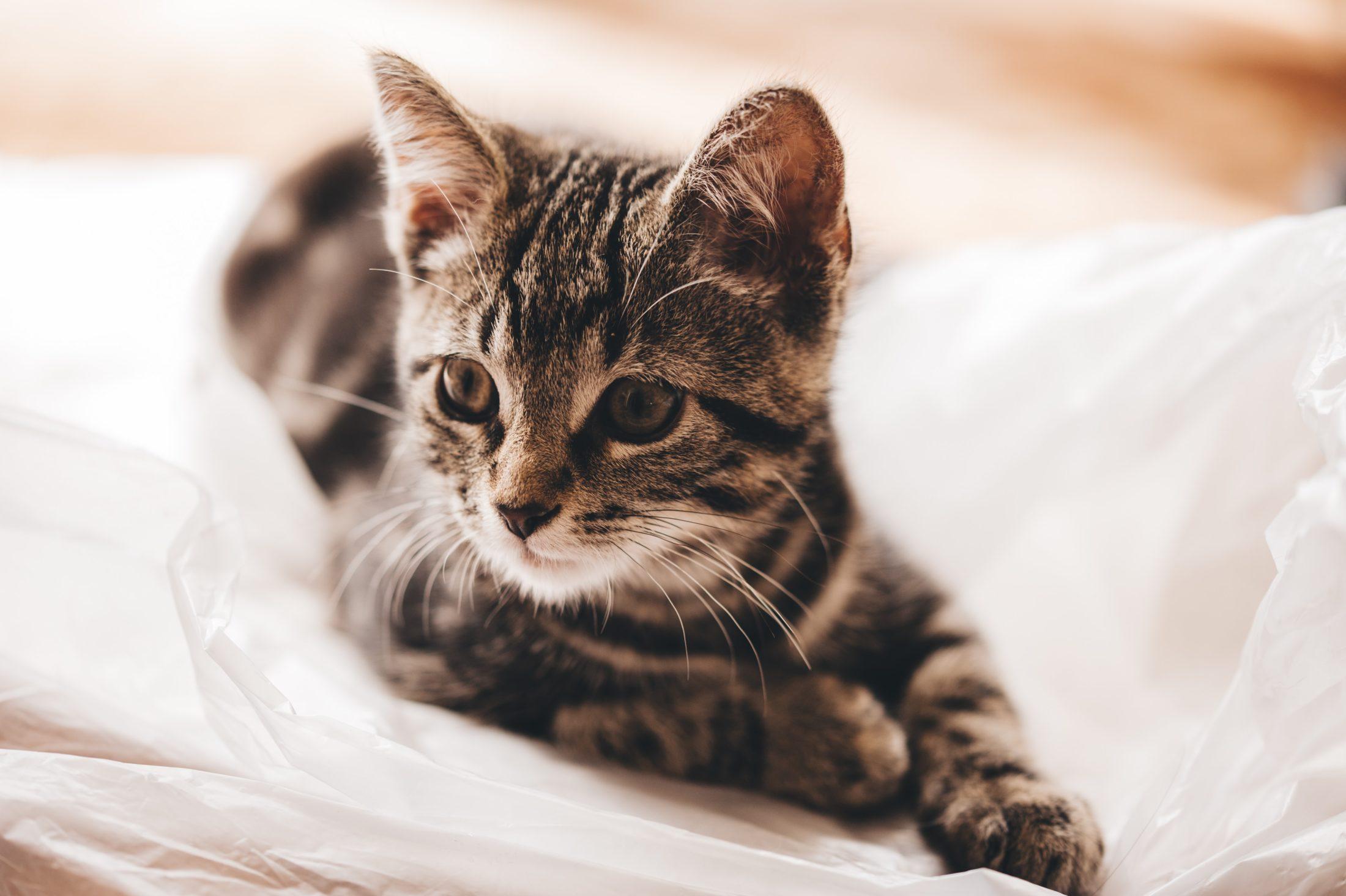Existem alguns tipos diferentes de caixa de areia para gatos.