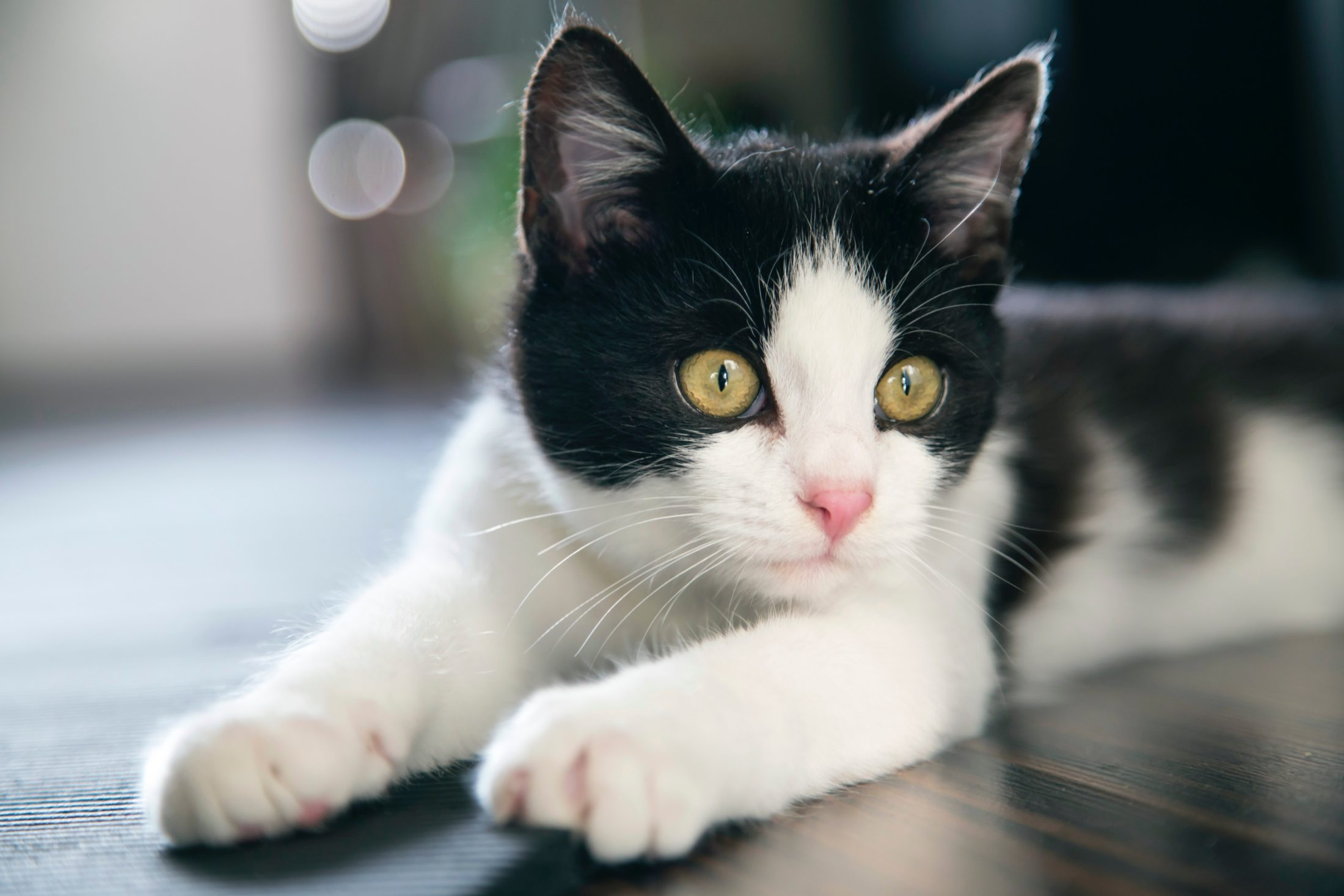 A caixa de areia para gatos é fundamental para o beme star do animal.
