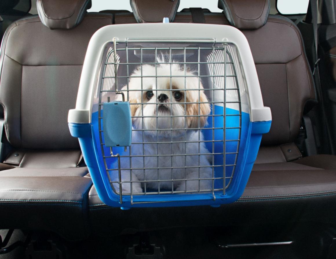 Shih Tzu dentdo de uma caixa de transporte na mala do carro
