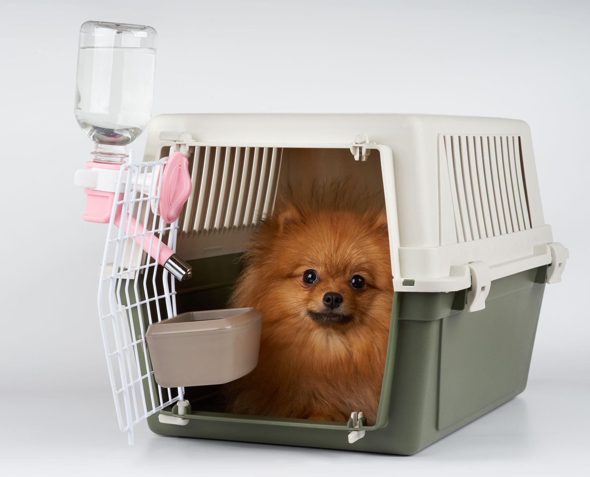 Lulu da Pomerania dentro de caixa de transporte com acessórios para comida e água