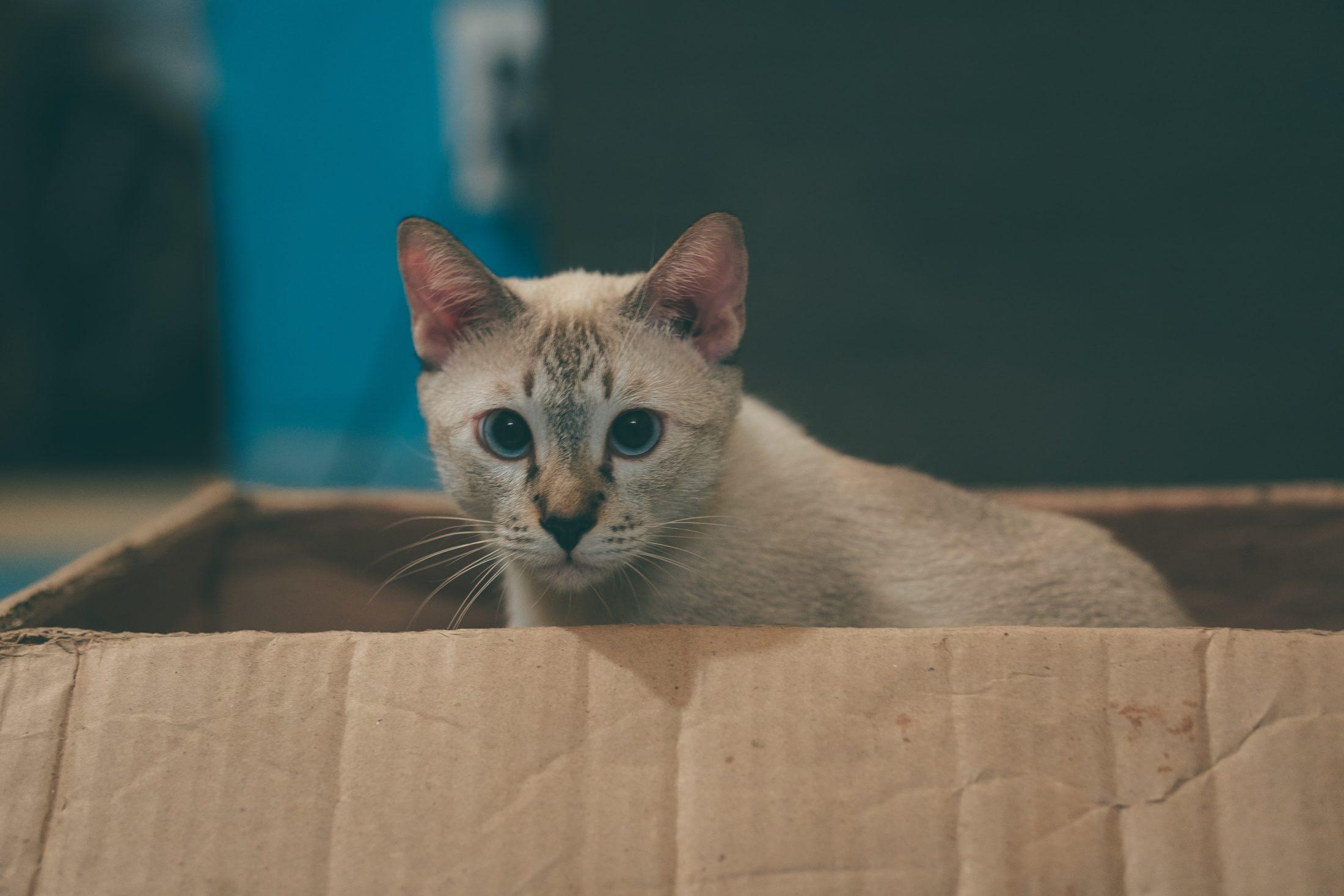 A caixa para gatos tem cheiro de outros lugares e pessoas.