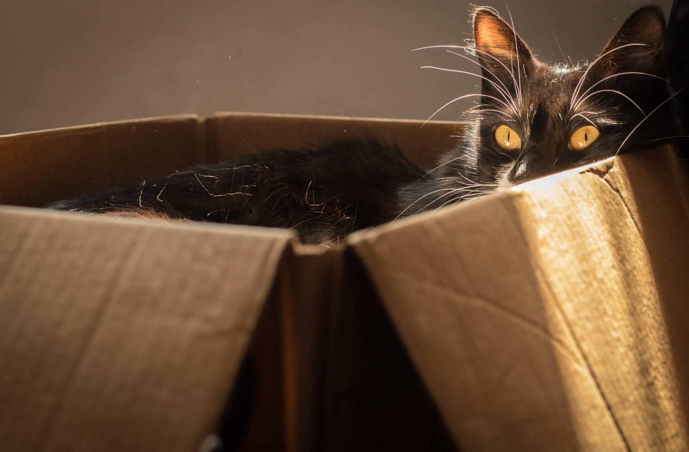 caixa para gatos é local seguro