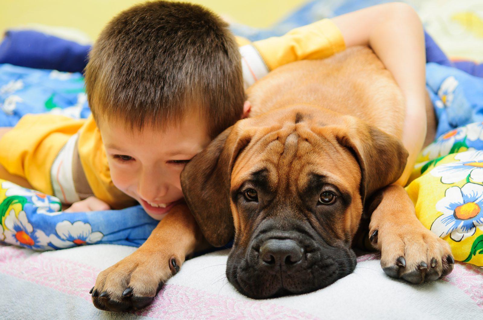 Dormir com cachorro: Boxer e menino deitados juntos na cama.
