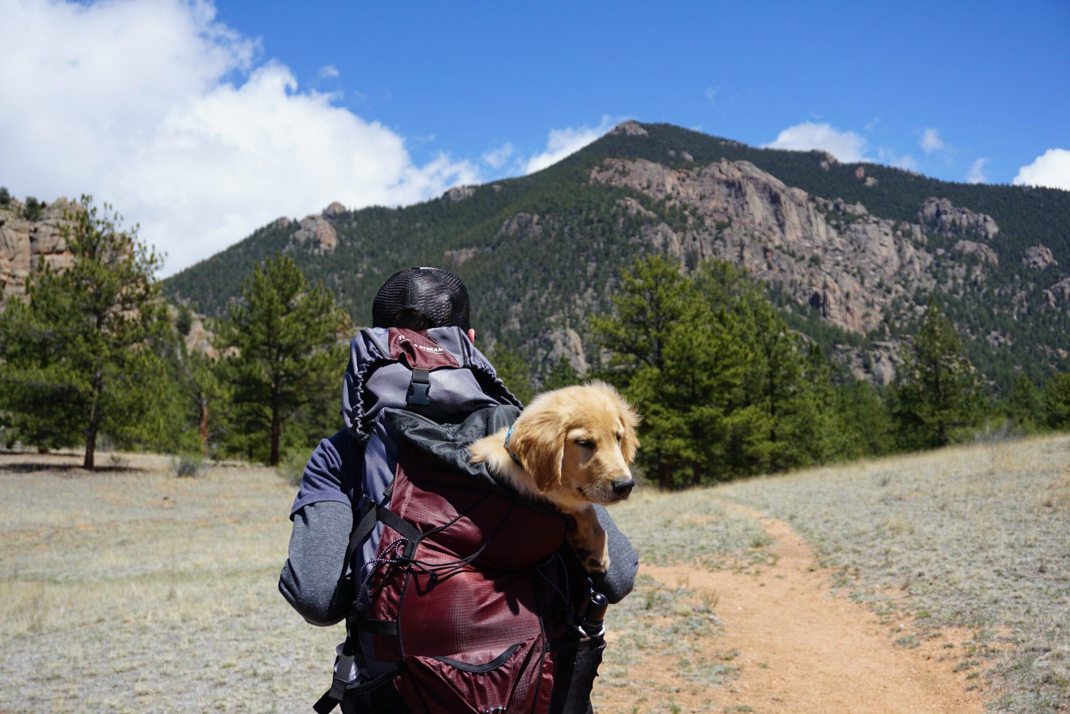 pessoa caminhando com cachorro em mochila nas costas