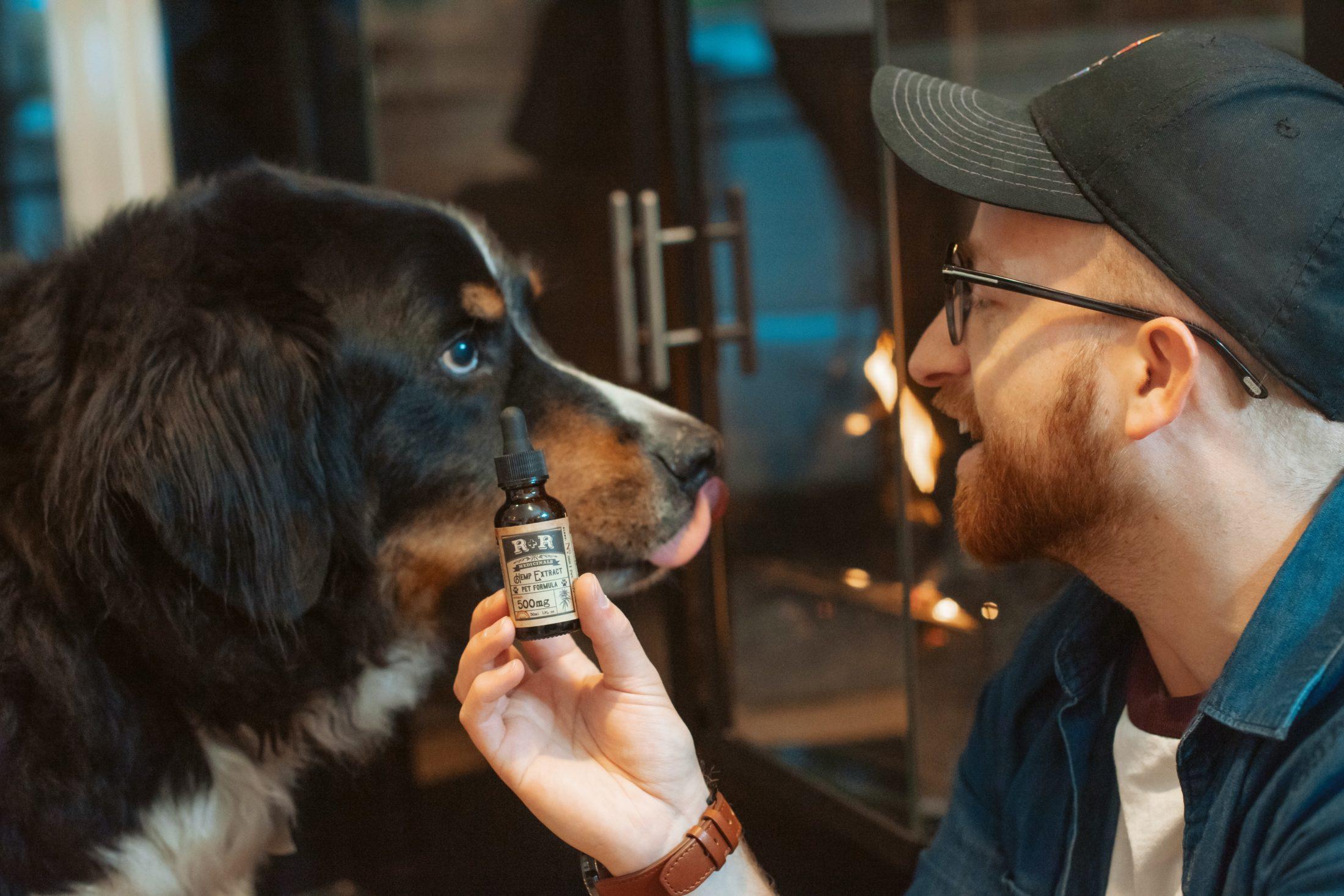 homem segurando frasco de óleo de canabidiol próximo ao seu cachorro bernese
