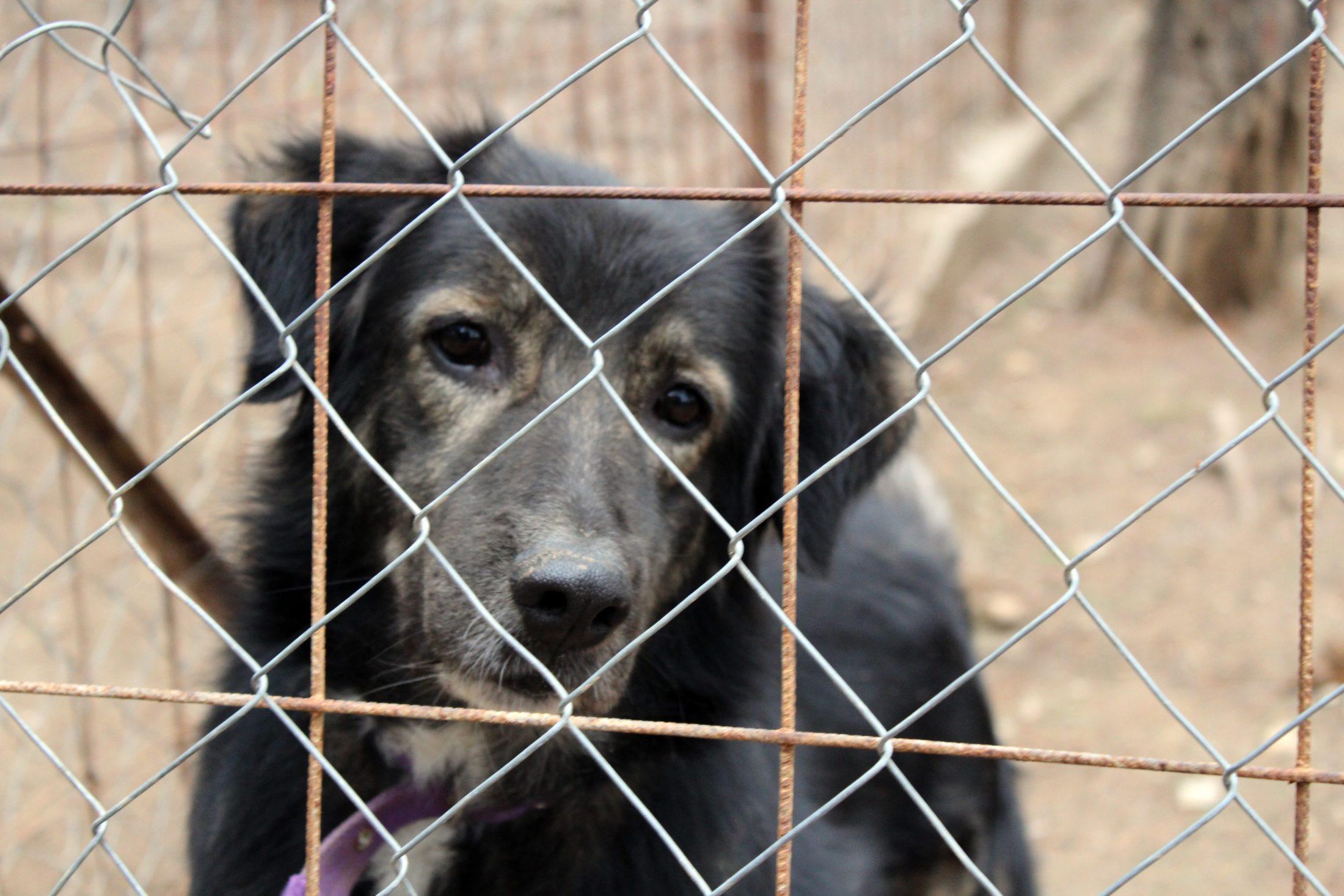 animal preso em canil para cachorro