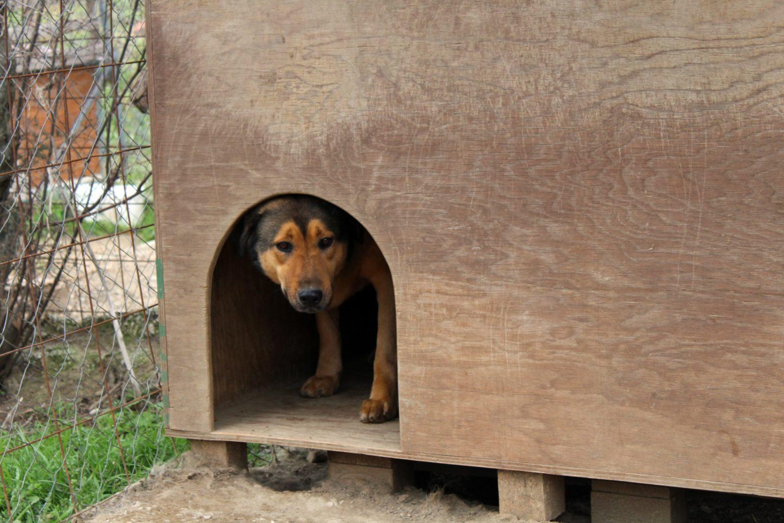 cachorro em seu canil de madeira