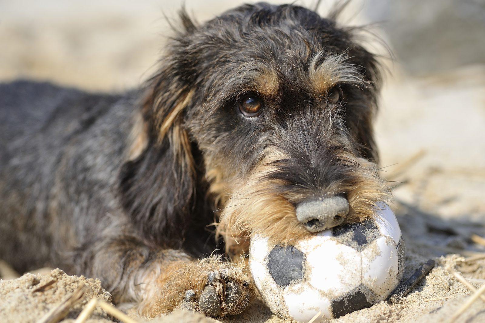 dicas-manter-cachorro-jovem-dar-nome-brinquedos